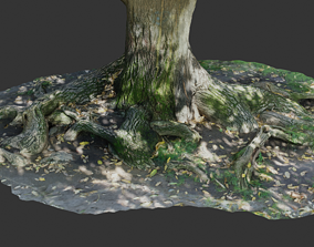 Photoscanned tree trunk and roots 3D model