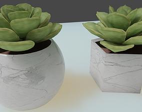 Echeveria - Lola Succulent 3D
