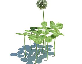 Plants Clovers And Wildflower 3D model