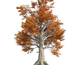 Sassafras Fall Tree 3D asset