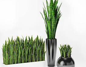Sansevieria 2 3D model