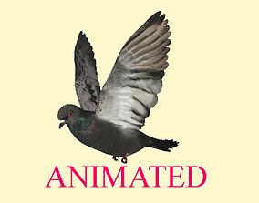 Animated flying realistic pigeon bird - loop 3D model 1