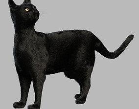 3D Black cat