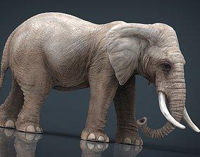 nature ELEPHANT 3D asset VR / AR ready