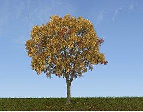 exterior Tree model