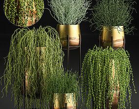 Succulents in a flowerpot for interior design 542 3D