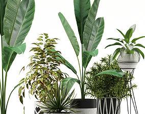 3D Plants collection 114