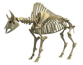 Buffalo Bison Skeleton 3D