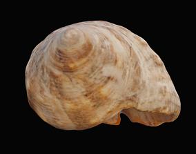 3D asset Tulip Sea Shell