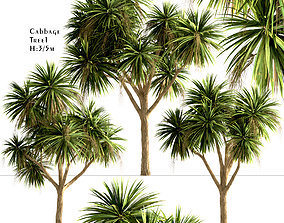 3D Set of New Zealand Cabbage or Cordyline Australis - 3
