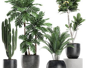 3D model Plants in a black pot for the interior 677