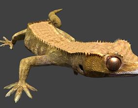 3D model animated Gecko