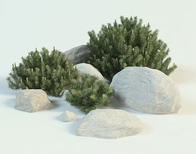 pinus mugo set 3D