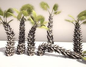 SABAL PALMETTO 3D asset