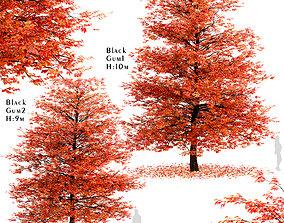 Set of Black Gum or Nyssa sylvatica Trees - 2 3D model