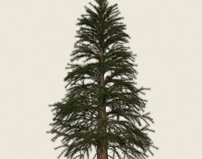 3D model Game Ready Conifer Tree 12