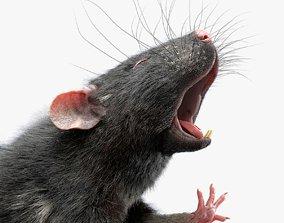 3D Rat Fur Rigged Black