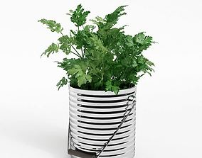 3D model Flat Leaved Parsley Pot