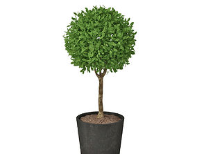 smal plant 03 3D vase