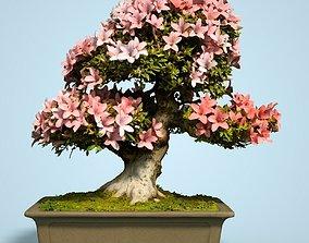 3D asset Satsuki Bonsai Tree Blossom 6