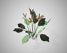Bird Of Paradise flower 3D asset