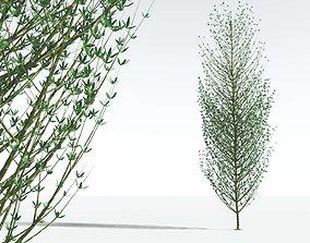 3D EVERYPlant Twistws Horsetail Tree 11 --12 Models--