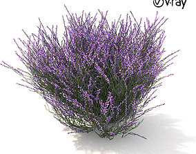 3D Violet heather