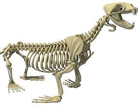 Sea Lion Skeleton 3D model