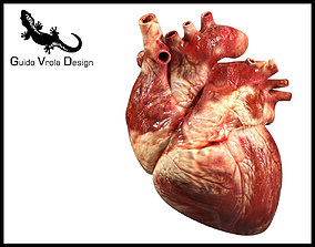 3D model Accurate human heart