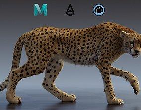 Cheetah groom 3D rigged
