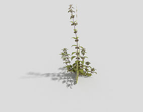 3D asset game-ready Low poly Plant