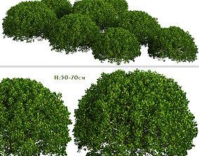 Set of Boxood or Buxus Shrubs - 3 Shrubs 3D
