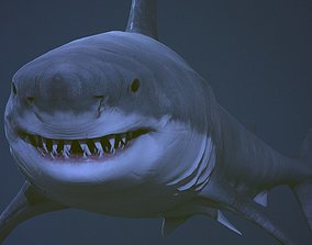 3D asset Great white shark AAA