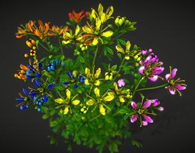 3D asset Flower Ruta Graveolens