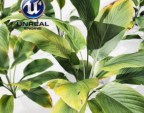 Realistic Plants 17 - UE4 Asset and FBX Files 3D model