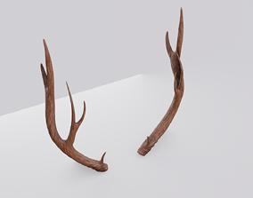 Deer Antlers wildlife 3D model