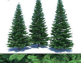 3D model Fir-tree Set 03 bark