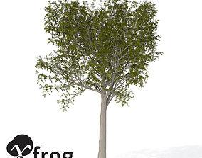3D model XfrogPlants European Mountain Ash EU