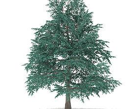 3D Blue Atlas Cedar Cedrus atlantica 10m