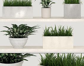 3D model Potted indoor plants