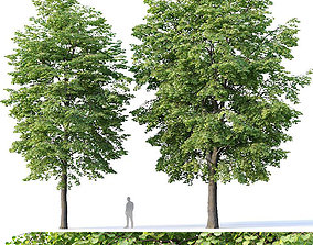Tilia europaea Nr 4 H12-14m Two tree 3D model