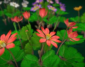 3D asset Flower Sanguinaria Canadensis