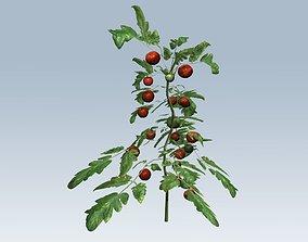 3D model realtime Tomato