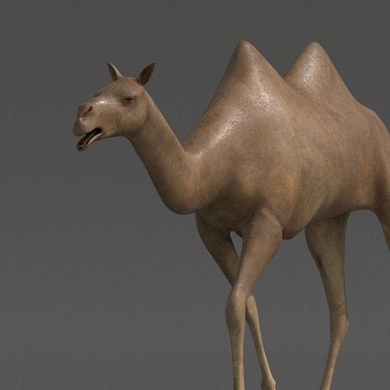 camel for vfx and games