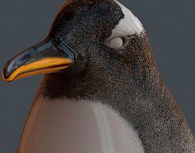 Penguin Gentoo - Antartic 3D asset