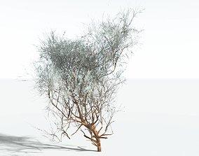 game-ready EVERYPlant Big Sagebrush LowPoly SINGLE --1