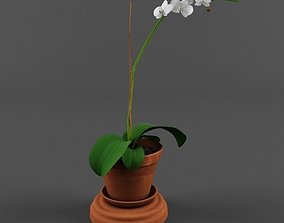 3D Orchid in a pot