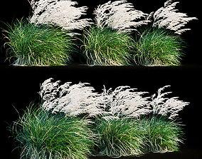 green Miscanthus sinensis in wind 3D model