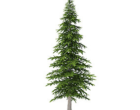 Fir Tree 4point5m 3D