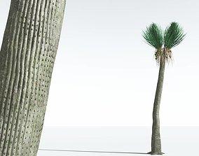 EVERYPlant Ovate Sigillaria 06 --18 Models-- 3D